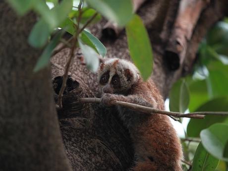 一批野生动物放生到太阳河自然保护区