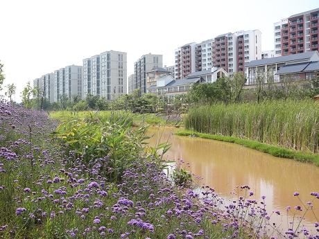湿地公园建设为城市宜居加码