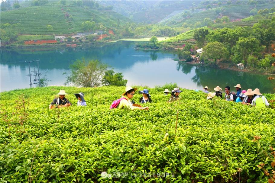 乐途旅游|走过千年一轮回的银生茶
