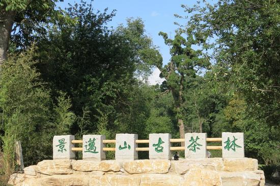 新浪旅游|普洱景迈山古茶林入选2015中国最具价值文化(遗产)旅游景区