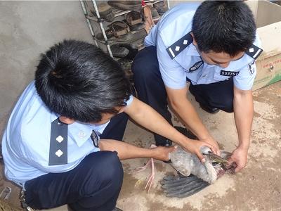 景东警民携手救助受伤钳嘴鹳
