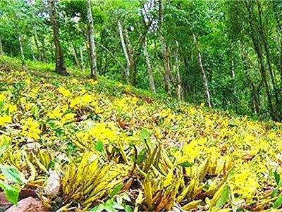 """普洱有3个""""服务精准扶贫国家林下经济及绿色产业示范基地"""""""