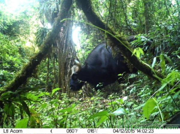 澜沧县申报国家级森林公园顺利通过评审