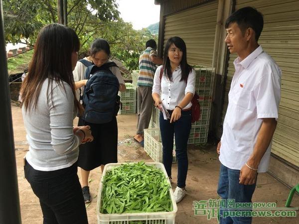 专业合作社助农发展脱贫摘帽