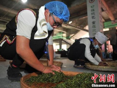 中新网|传统制茶工艺亮相中国普洱茶节引围观
