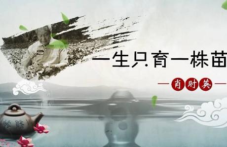 大国茶匠|肖时英——一生只育一株苗