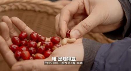 《你所不知道的中国》第三季|普洱不只有茶,还有这个吸引众多商人前来!