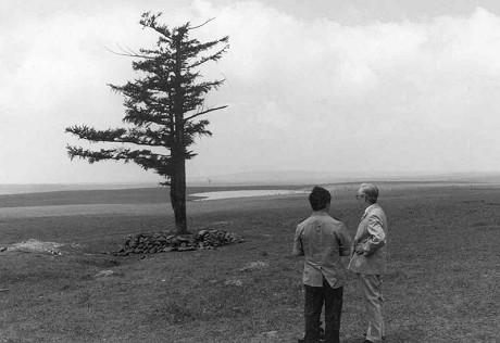 """从一棵树到一片""""海"""""""