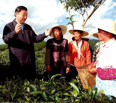 产业富 茶农笑
