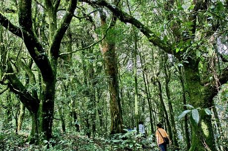 建设森林普洱 争当生态文明建设排头兵