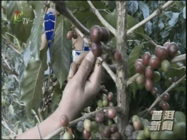普洱新闻(2018年2月27日)