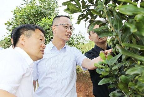 卫星在江城调研脱贫攻坚工作时强调坚持问题导向标准导向落实导向坚决打赢深度贫困地区脱贫攻坚战