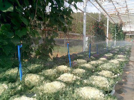 景东:手机遥控灌溉施肥