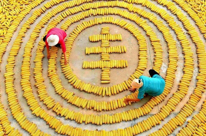 人民日报 中国农民丰收节来了!习近平:这是一件影响深远的大事