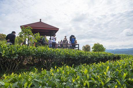 普洱市茶旅融合产业不断发展壮大