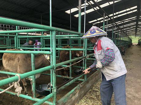 发展牛产业南康奔小康
