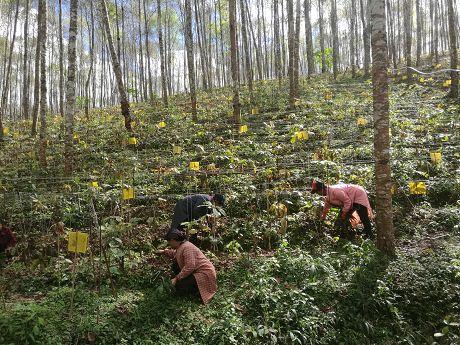 """思茅区绿色发展路径之二林下""""生金""""有门路生态资源变财源"""
