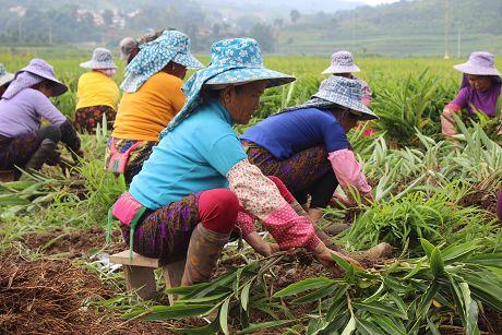 景信乡景冒村——组织引领促发展特色产业助增收