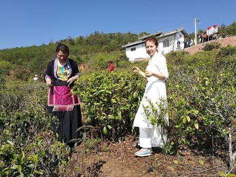 茶产业托起农户绿色增收致富梦