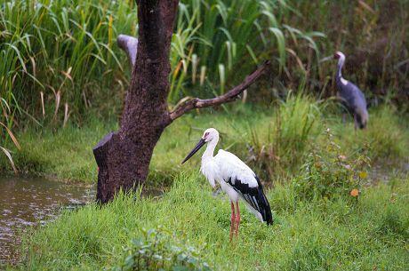普洱市划出5个生物多样性保护优先区域