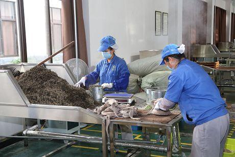 """""""一片绿叶""""的神奇嬗变——思茅区全力打造有机茶产业"""