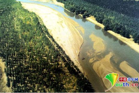 每年可以阻止上亿吨黄沙侵入黄河的护河锁边林。资料图