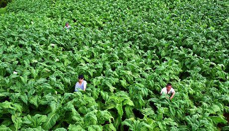 半坡乡:一个山区乡的产业坚守与突围