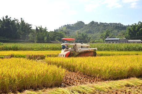 喜看稻菽千重浪——景东彝族自治县粮食生产发展纪实