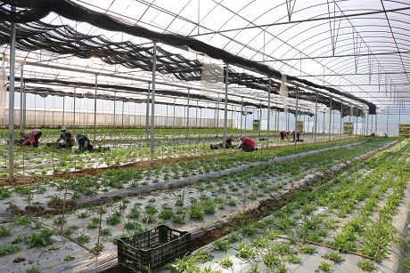 景谷芒旺村多路径发展壮大村集体经济