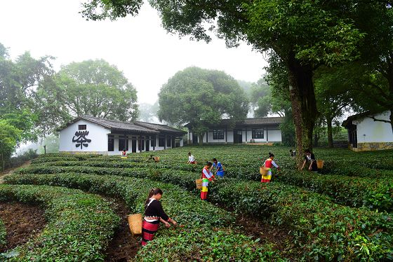 中华普洱茶博览苑景区获评4A级旅游景区